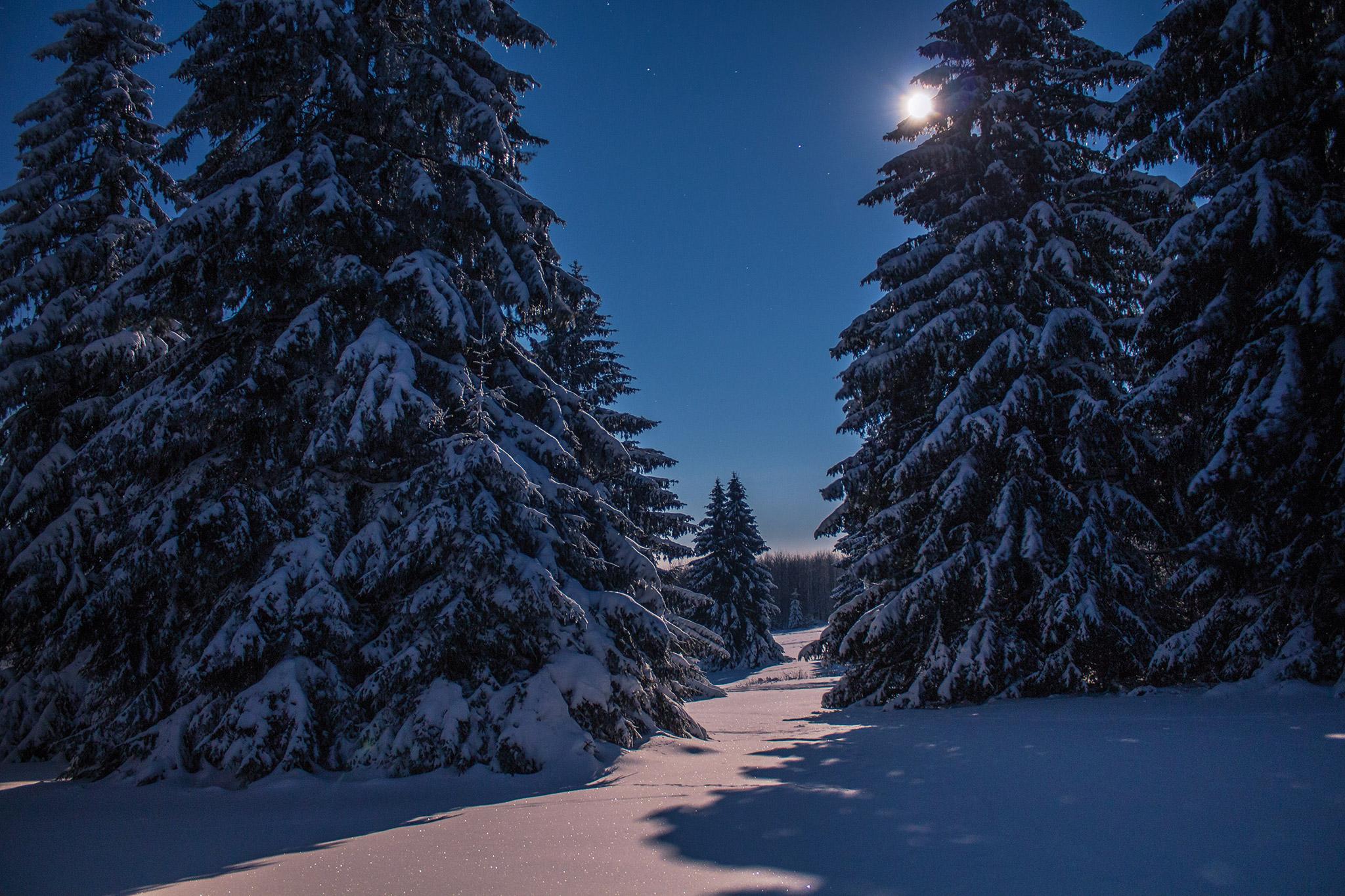 Winternacht auf der Fuchskaute | Foto: Johannes Willwacher