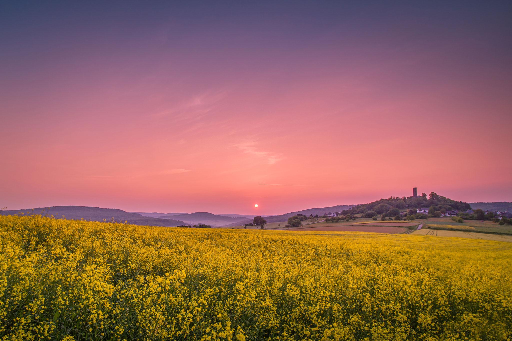 Blühendes Rapsfeld bei Merenberg | Foto: Johannes Willwacher